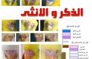 الفرق بين الذكر والانثى فى عصافير البادجي طيور الحب
