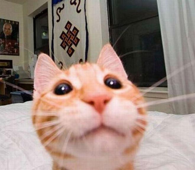 بالصور : أفضل لقطات سيلفي الحيوانات