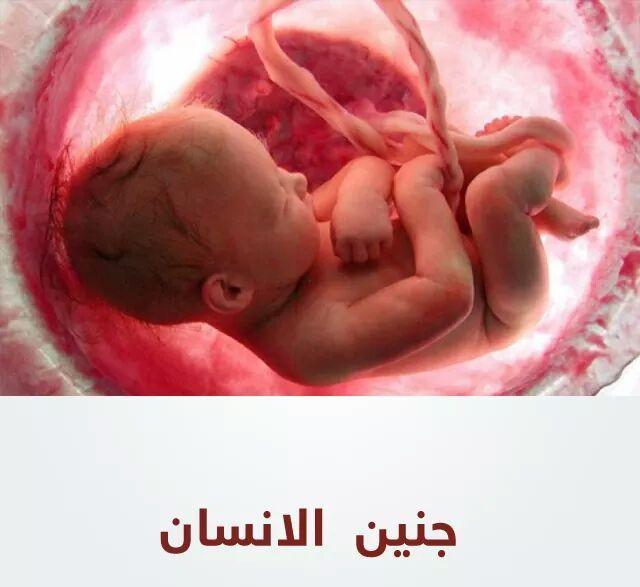 جنين الانسان