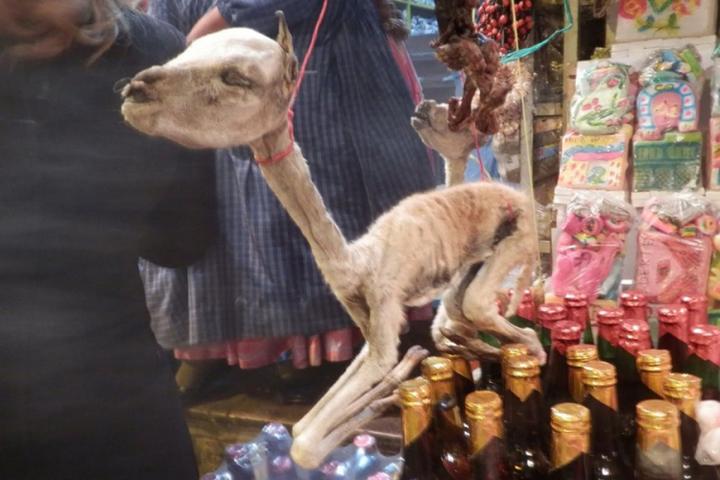 سوق للحيوانات المجففة في بوليفيا .. صور