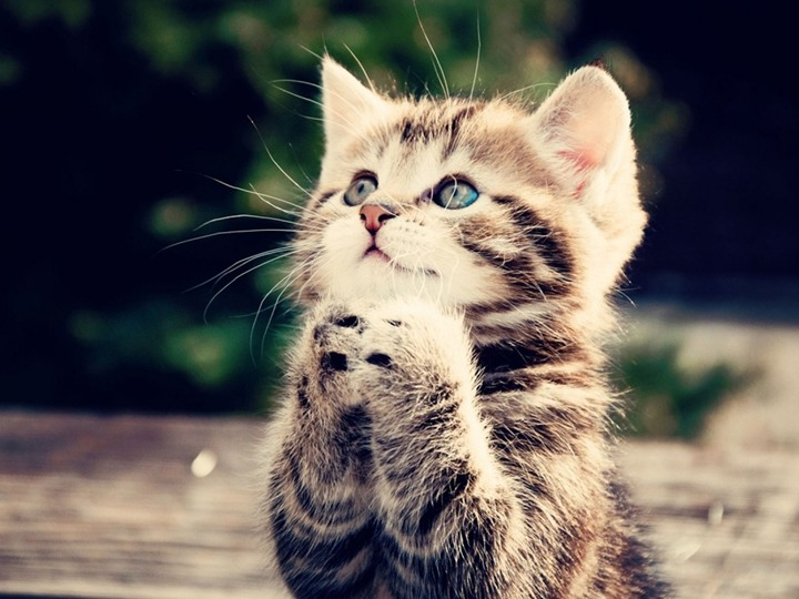 شاهد بالفيديو رقص قطة على أنغام الموسيقى