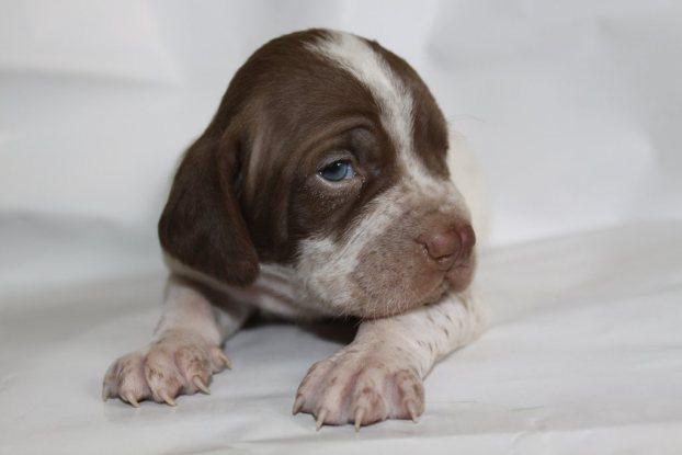 بالصور : أندر 5 أنواع كلاب في العالم