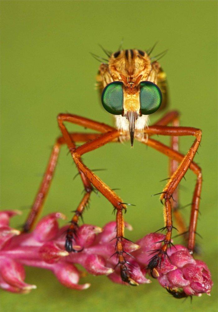 شاهد صور أعجب الحشرات في العالم