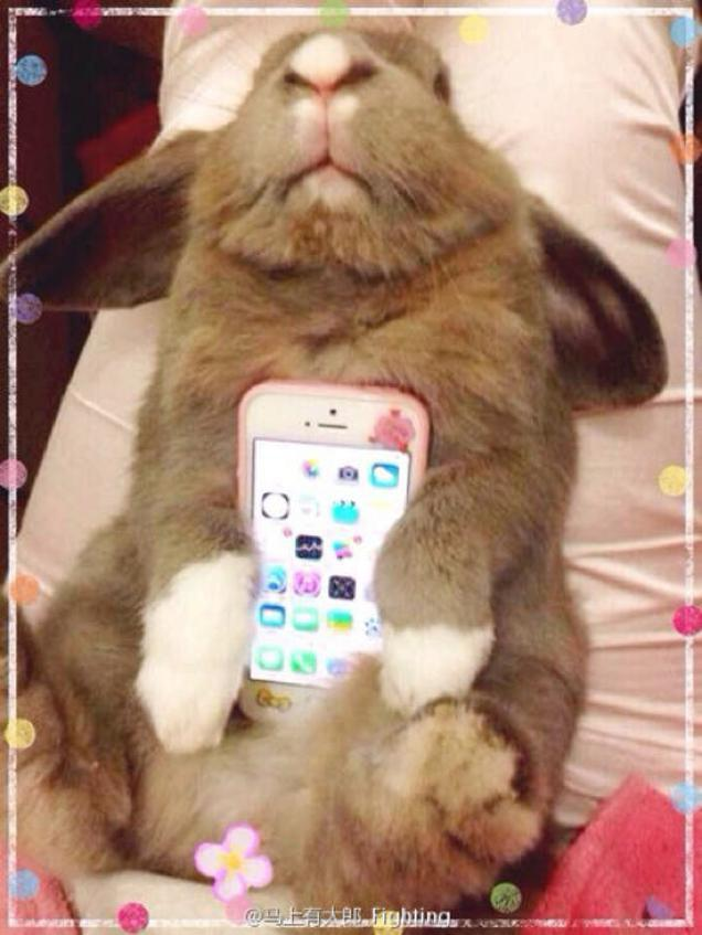 حيوانات واكسسوارات هواتف ذكية … صور
