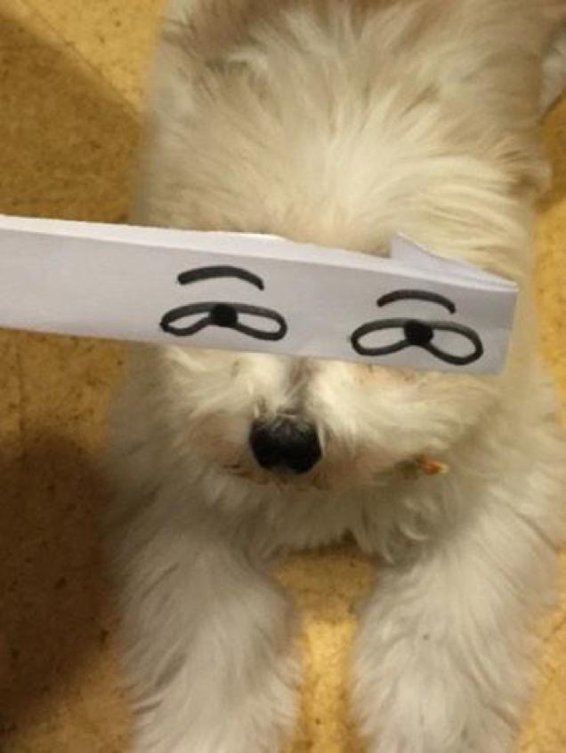 بالصور : عيون كاذبة للقطط