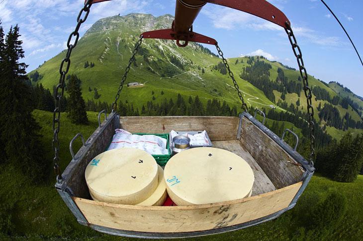 شاهد مزارع ومصانع انتاج الجبن السويسري