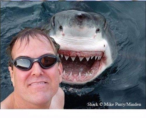 سيلفي القرش والسفينة الغارقة في أفضل صور انستجرام شهر اكتوبر 2014