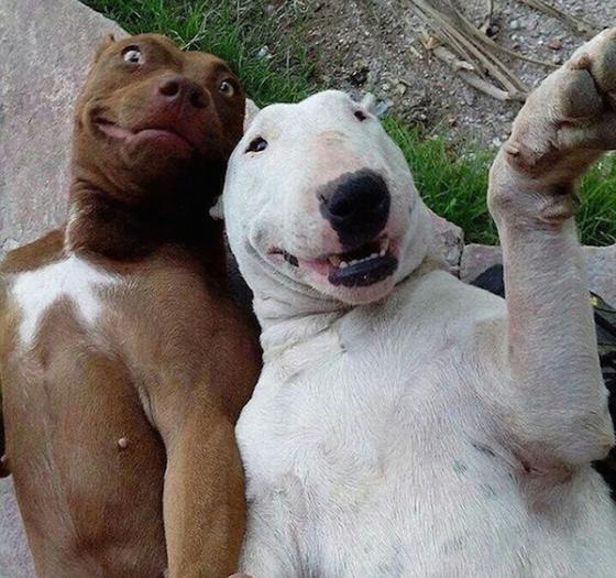 افضل صور السيلفي للحيوانات في 2014