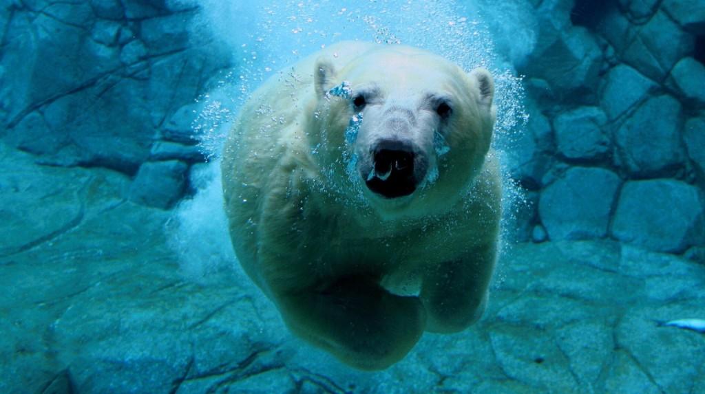 أفضل صور الحيوانات تحت الماء في 2014