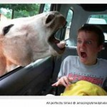 Another-zoo-moment-another-reaction-caught-resizecrop--