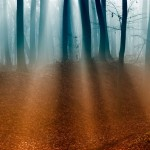 Autumn-Forest-ipad-4-wallpaper-ilikewallpaper_com_1024