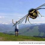 Bee-photobomb-resizecrop--