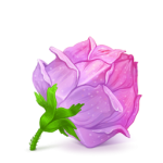 Box-22-Rose-Pink-icon