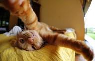 اجمل صور سيلفي القطط Cats Selfies