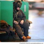 Dog-man-is-waiting-for-his-ride-resizecrop--