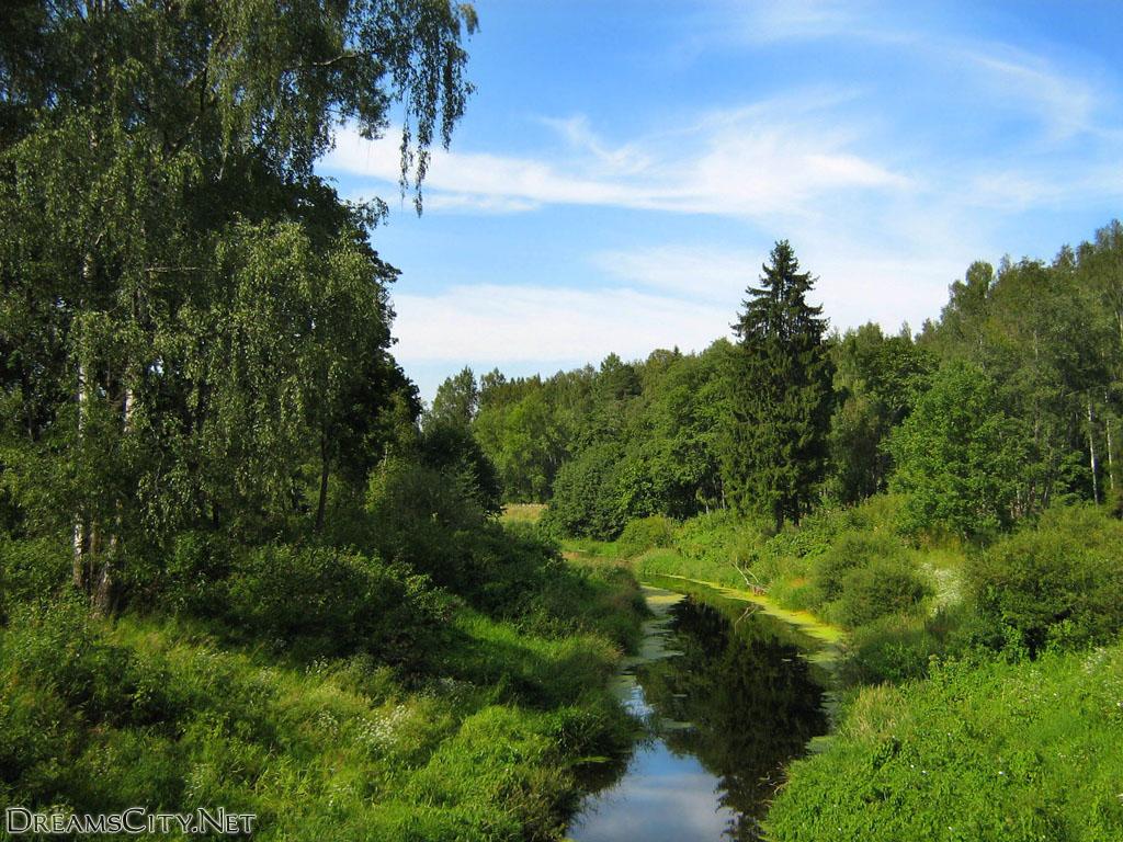 Nature (7)