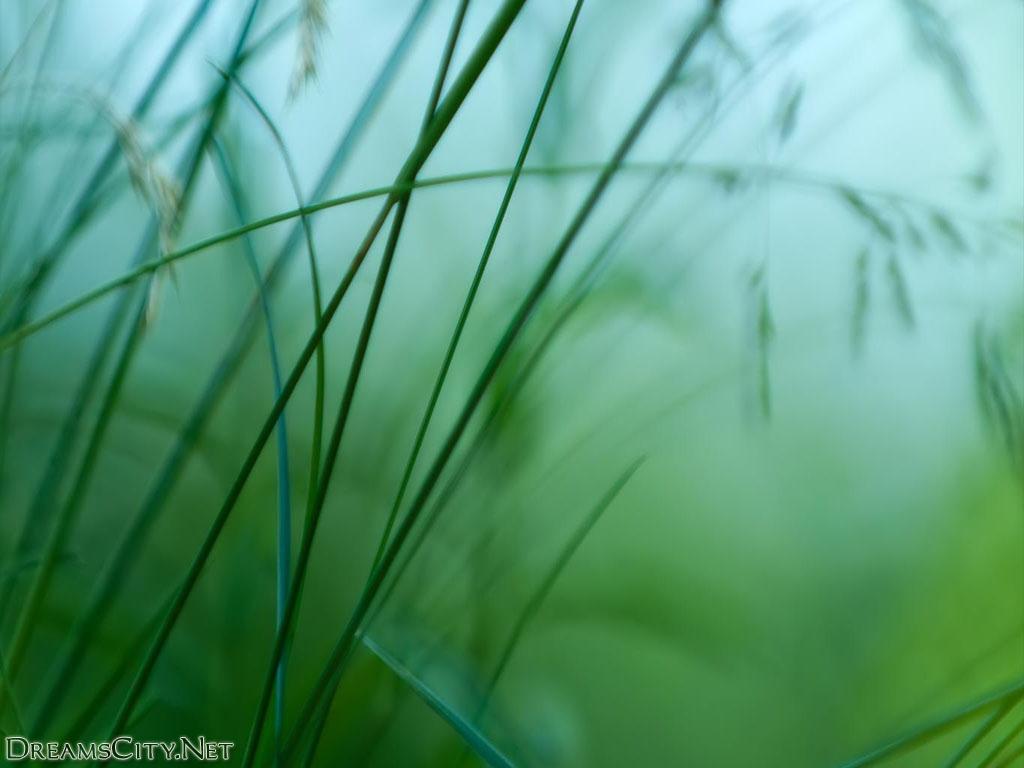 Nature (8)