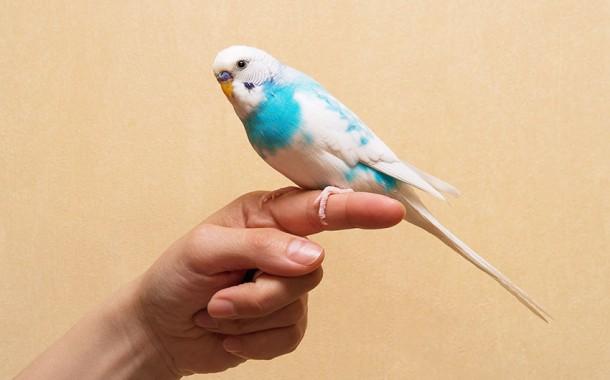 نصائح مهمة لترويض الطيور
