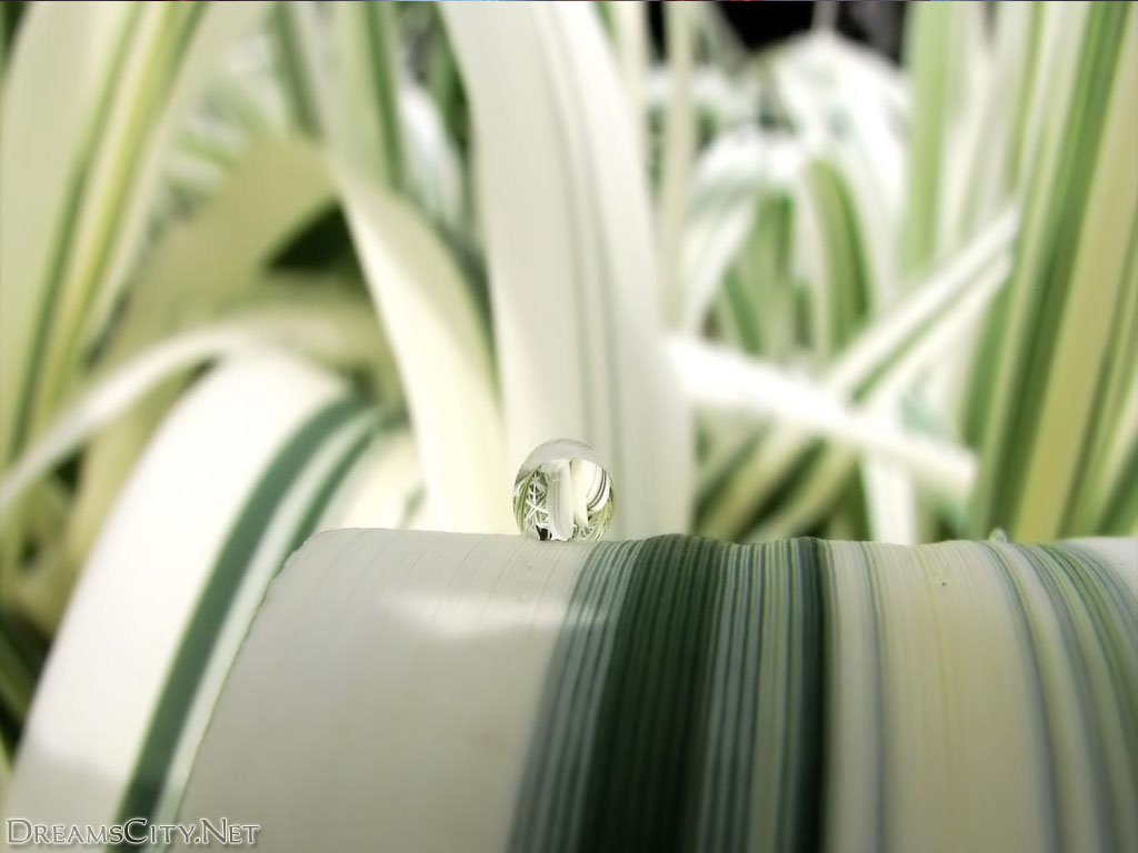 Water-drops02