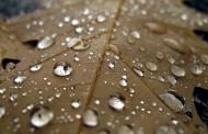 صور وخلفيات قطرات الماء على اوراق الشجر