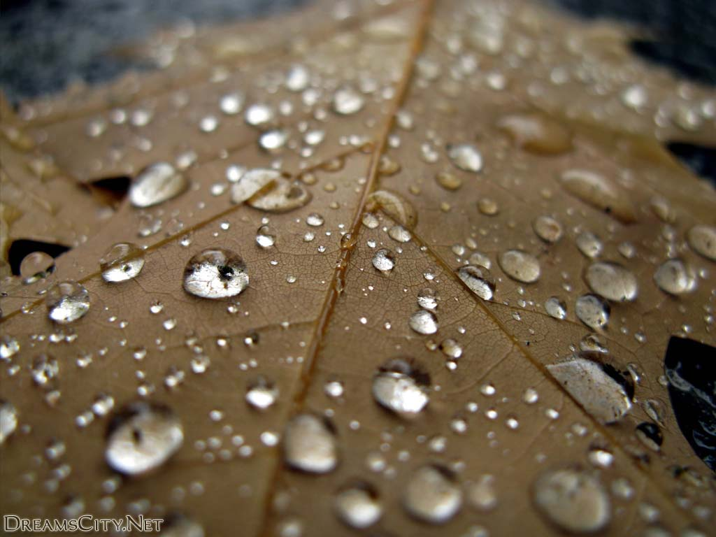 Water-drops03