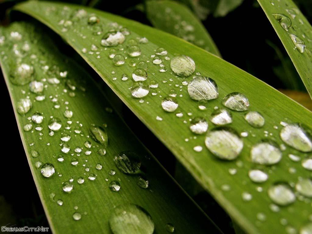 Water-drops05