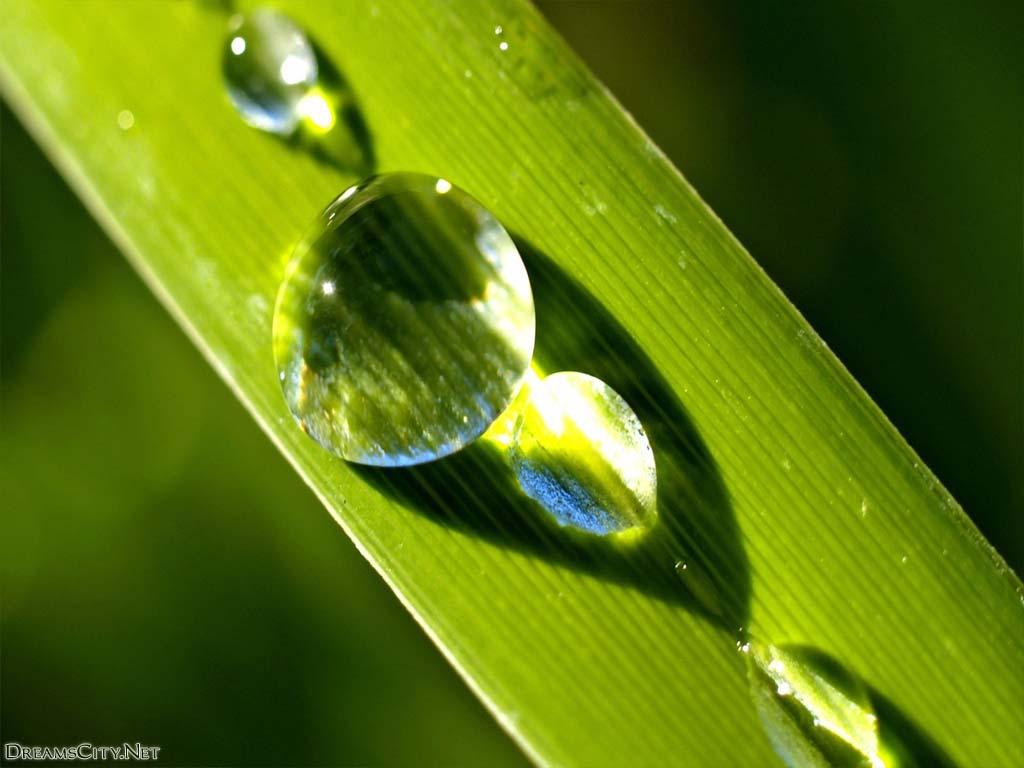 Water-drops11