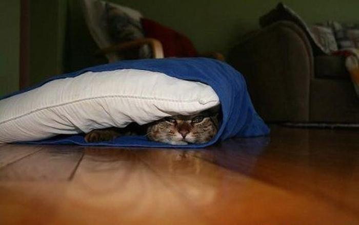 بالصور : القطط المختفية