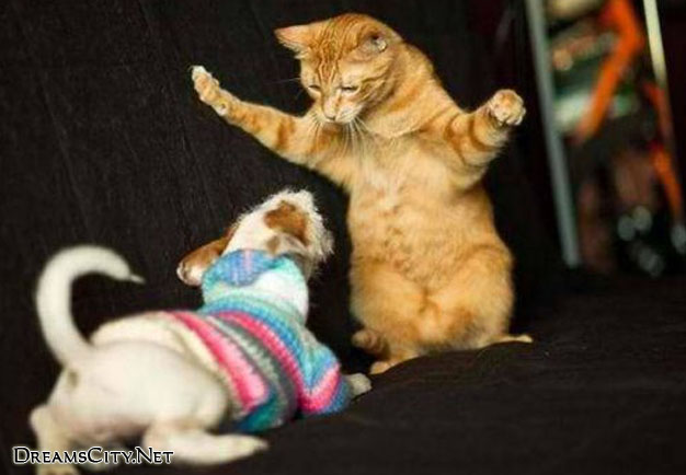 cats&dog01