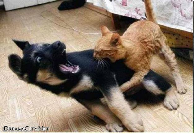 cats&dog02