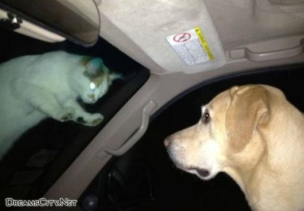 cats&dog04