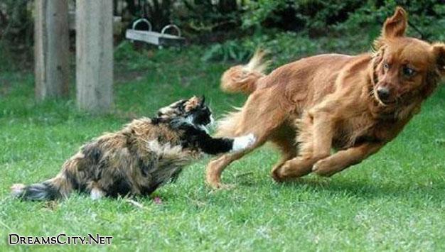 cats&dog05