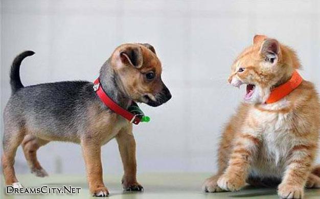 cats&dog06
