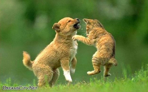 cats&dog07