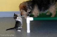 اجمل صور الكلاب مع القطط