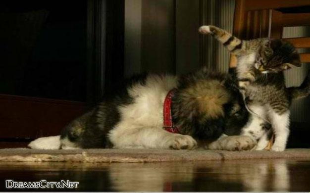 cats&dog09