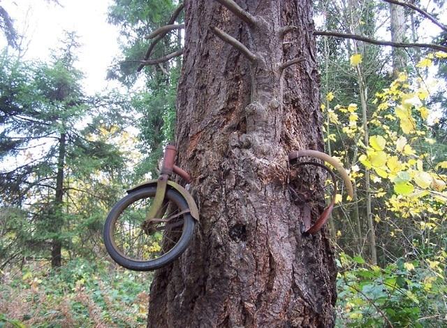 أغرب اشكال الاشجار حول العالم