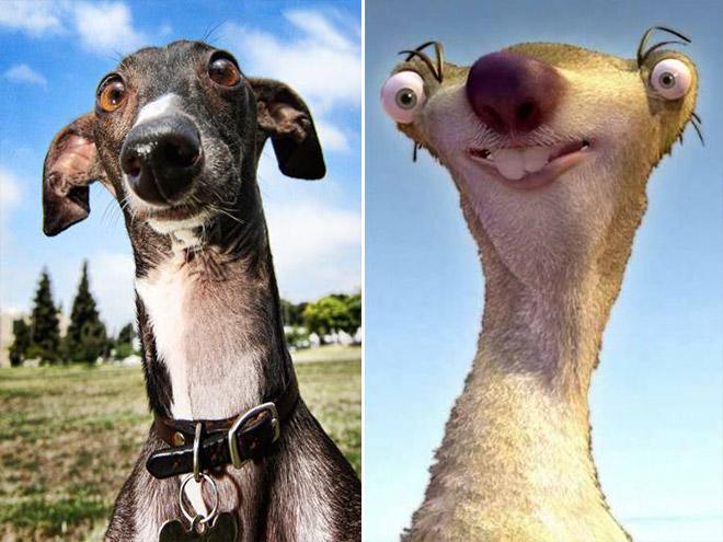أغرب صور الكلاب في العالم