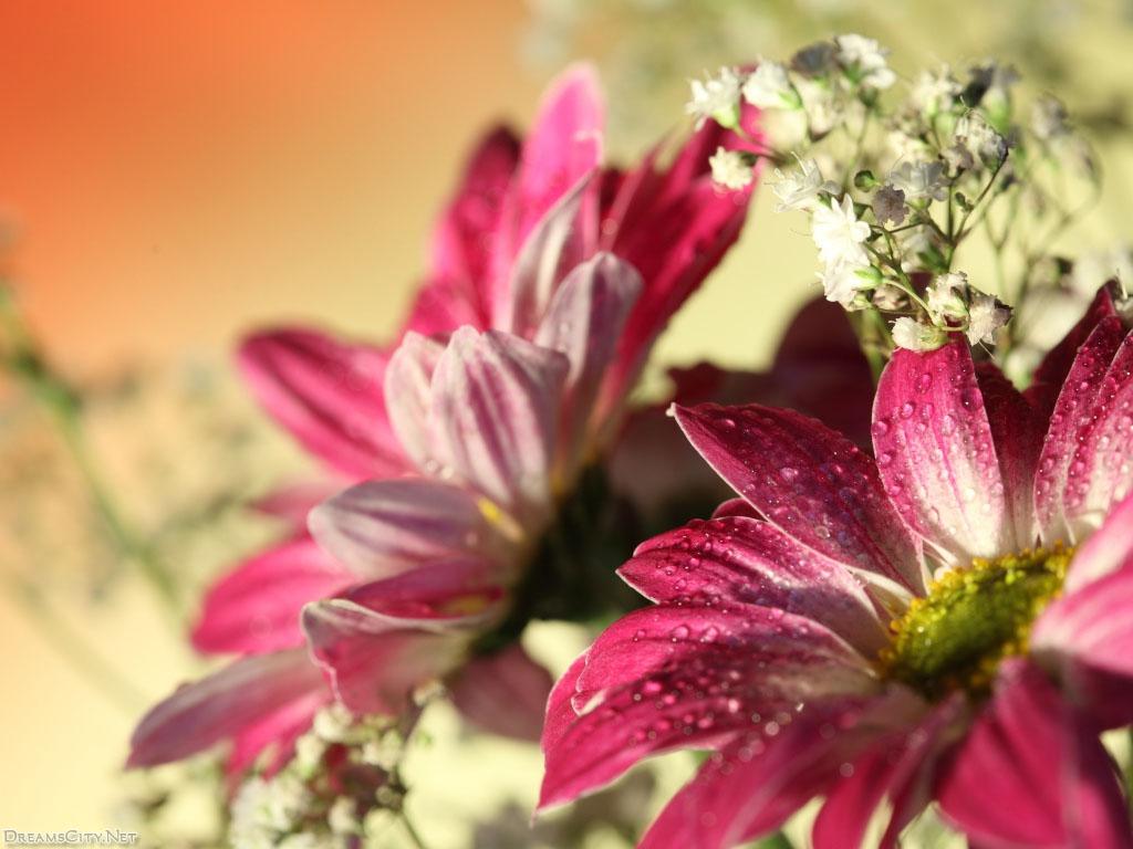 flower_water-01