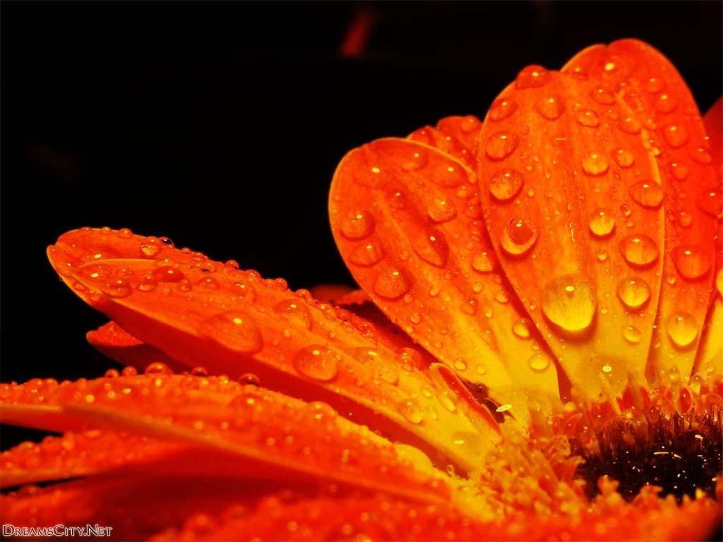 flower_water-02