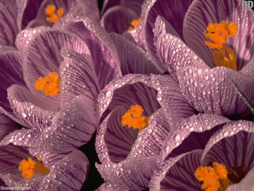 flower_water-03