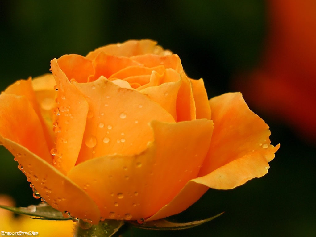flower_water-04