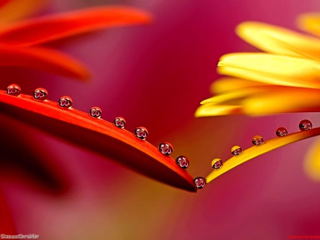 flower_water-08