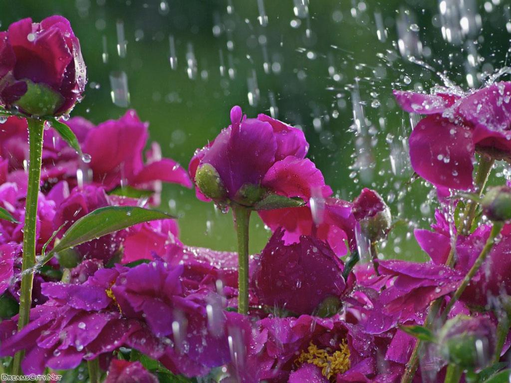 flower_water-10