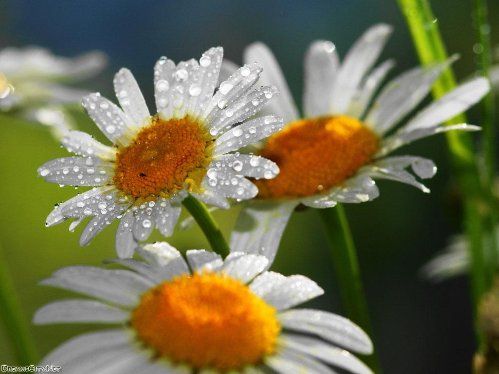 flower_water-12