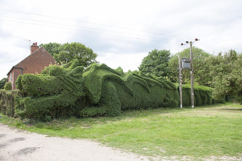 بالصور : حديقة التنين