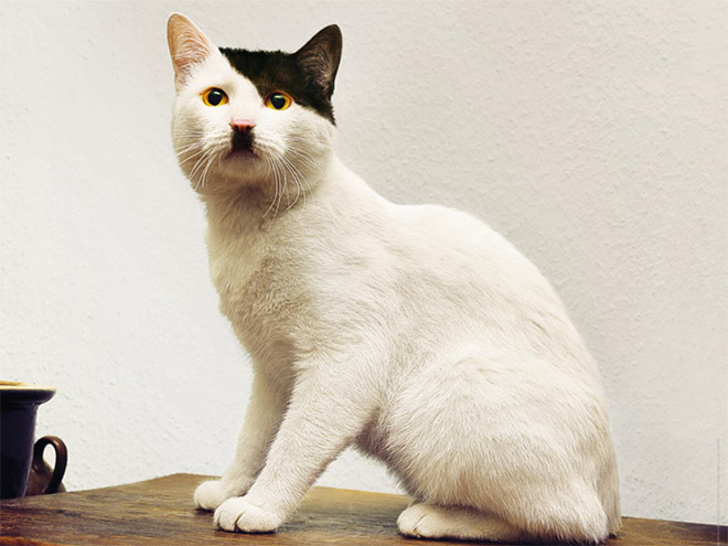 أغرب صور : قطط تشبه الزعيم الالماني هتلر
