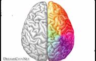 معلومات هامة عن الشق الايمن للدماغ : الدماغ الايمن