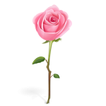 pink-roses-icons-39393