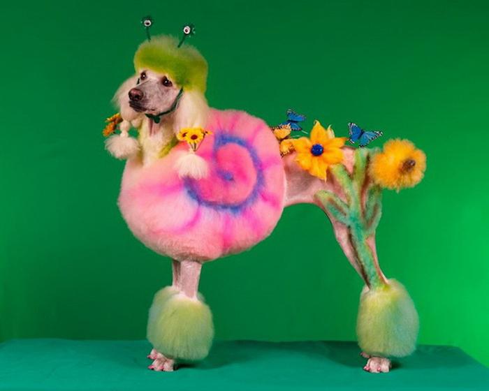 صور كلاب ضاحكة